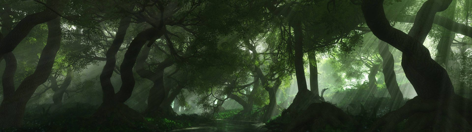 beautiful forest wallpaper hd
