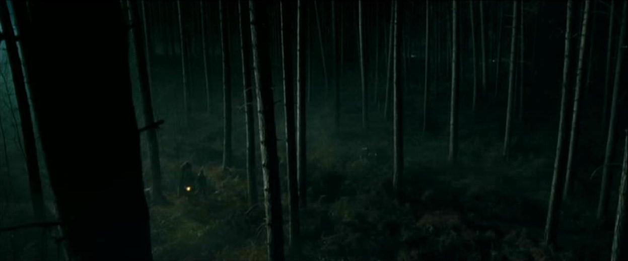 Floresta proibida